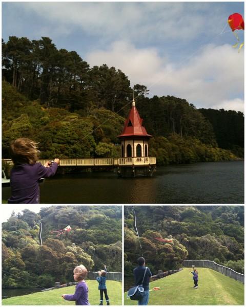 Kite flying at Zealandia