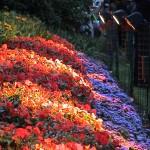 Flowers lit at night in Botanical Gardens