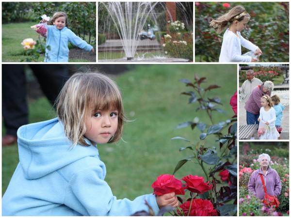 Rose petals for potpourri in the Botanical Gardens