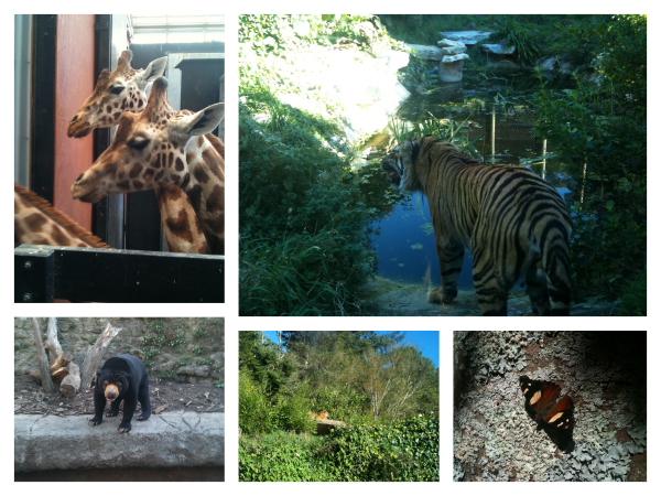 Tigers, sunbears & more