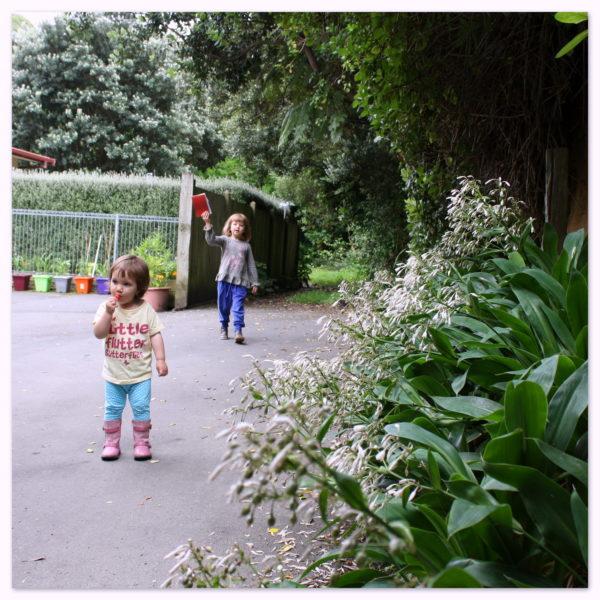 Renga renga lillies along the drive-way