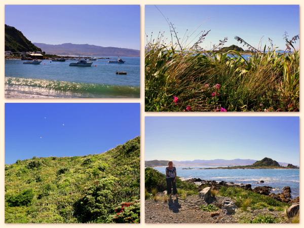 A beautiful walk around Island Bay on Wellington's South Coast