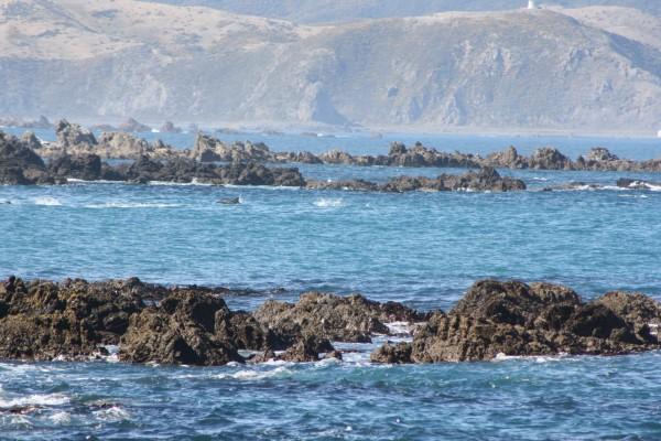 Beautiful Wellington - so gorgeous on a good day :)