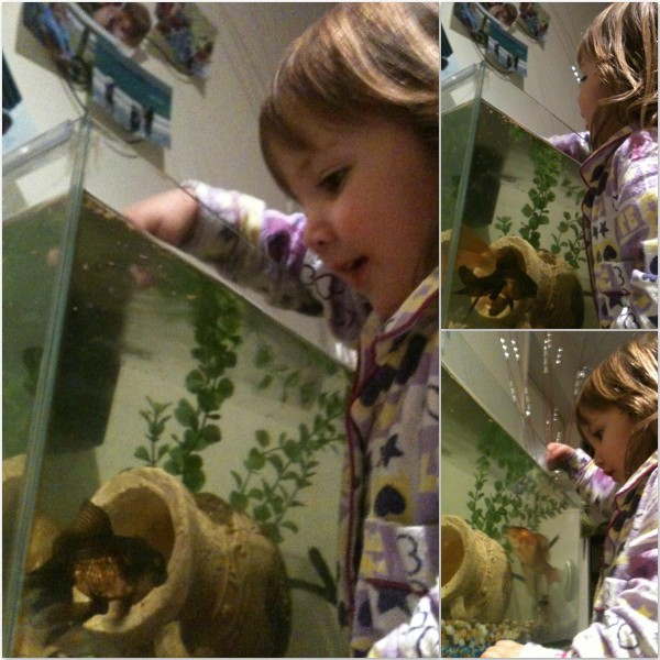 Alice feeding our fish