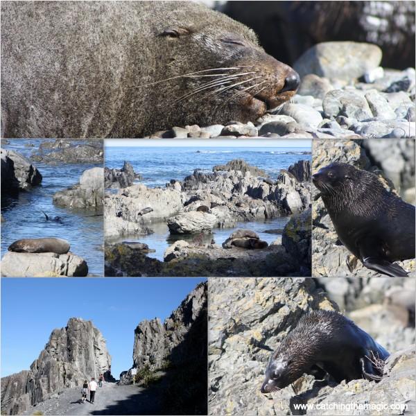 Seals at red rocks coastal walk