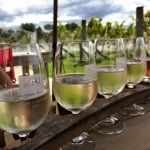 Wine tasting in Martinborough