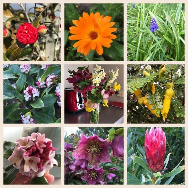 Winter colours in the garden in Martinborough.