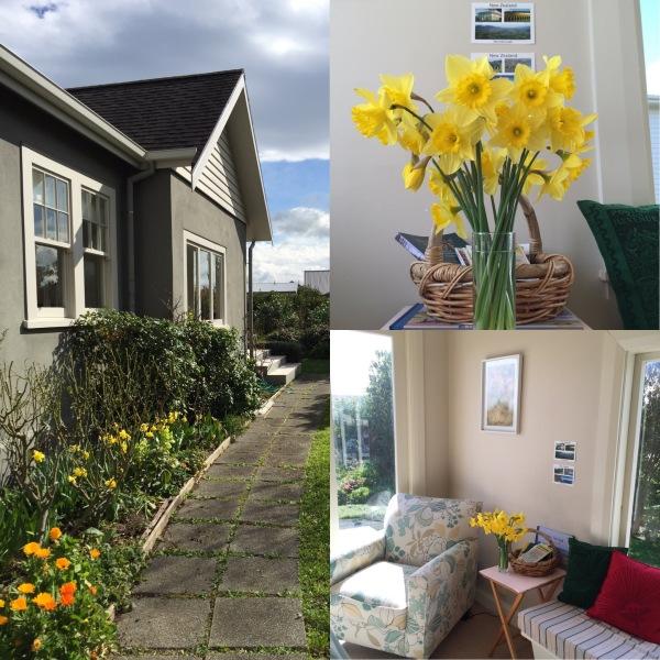 Daffodils aplenty in the sunshine in Martinborough.