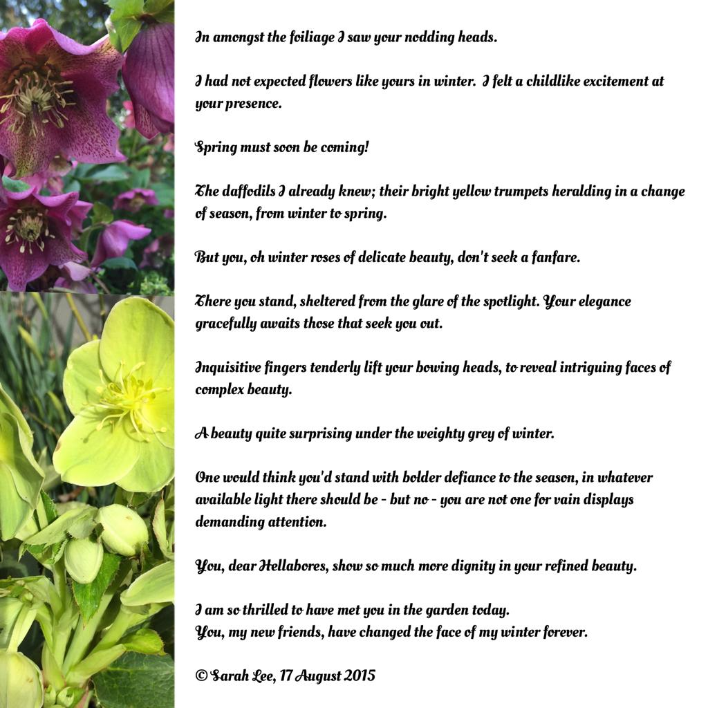 My Sunday Photos Winter Flowers Inspiring Prose