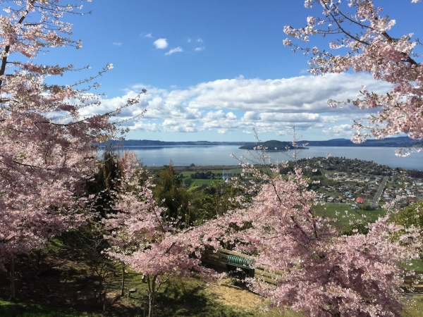Gorgeous blossom trees!
