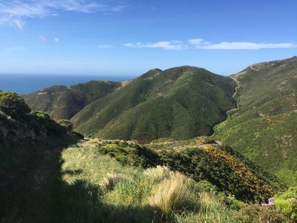 South Coast hills of Wellington walking tracks.