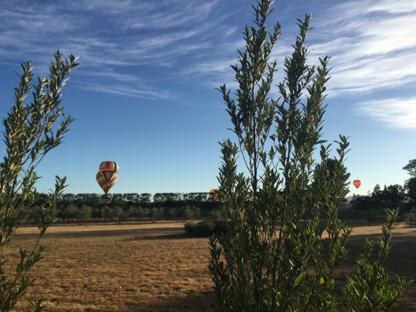 Hot air balloons floating over Martinborough.