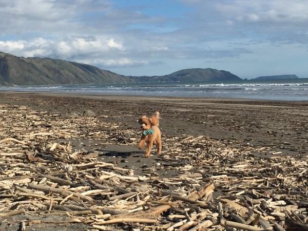 So much driftwood!