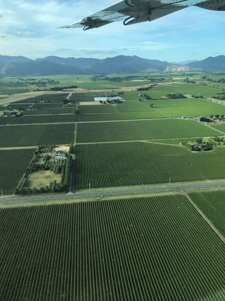 Vineyards of Blenheim