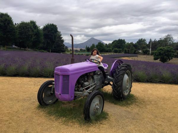 Lavender tractor